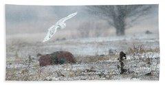 Snowy Owl In Flight 3 Beach Sheet