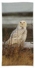 Snowy Owl In The Salt Grass Beach Towel