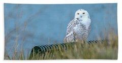 Snowy Owl On A Park Bench Beach Towel