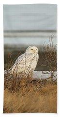 Snowy Owl On Cape Cod Beach Towel