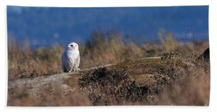 Beach Towel featuring the photograph Snowy Owl On Log by Sharon Talson