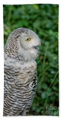 Beach Towel featuring the photograph Snowy Owl by Patricia Hofmeester