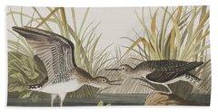 Solitary Sandpiper Beach Sheet by John James Audubon