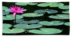 Solitary Water Lily Beach Sheet by Laurel Talabere
