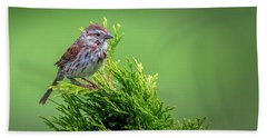 Song Sparrow Perched - Melospiza Melodia Beach Towel