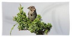 Song Sparrow Port Jefferson New York Beach Sheet