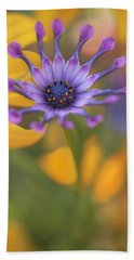 Beach Towel featuring the photograph South African Daisy by Jacqui Boonstra
