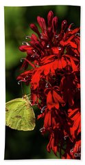 Southern Dogface On Cardinal Flower Beach Towel by Barbara Bowen