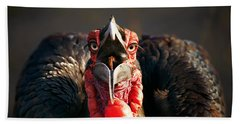 Southern Ground Hornbill Swallowing A Seed Beach Towel by Johan Swanepoel