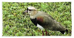 Southern Lapwing Beach Towel by Norman Johnson