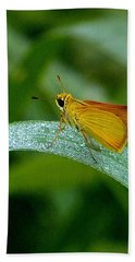 Beach Towel featuring the photograph Southern Skipperling Butterfly  000 by Chris Mercer