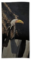 Beach Towel featuring the digital art Southern Yellow Billed Hornbill by Ernie Echols