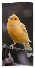 Spanish Timbrado Canary Beach Towel