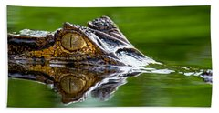 Spectacled Caiman Caiman Crocodilus Beach Towel by Panoramic Images