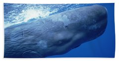 Sperm Whale Underwater Portrait Beach Towel by Flip Nicklin
