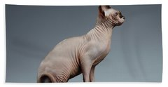 Sphynx Cat Sits And Looking Forward On Black  Beach Towel