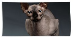Sphynx Cat Sits In Front View On Black  Beach Towel