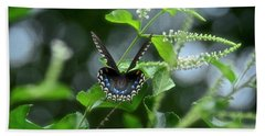 Spicebush Swallowtail On Sweet Almond Flower Beach Sheet by Carol Bradley