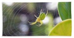 Spider In Italy 4 Beach Sheet
