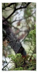 Spider Web In Tree Beach Towel