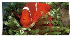 Spinecheek Anemonefish, Indonesia 2 Beach Sheet