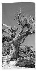 Spirit Tree Beach Sheet
