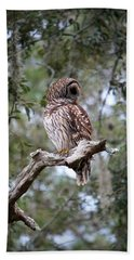 Spotted Owl Beach Sheet