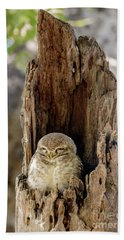 Spotted Owlet Beach Towel