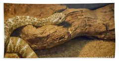 Spotted Rattlesnake   Blue Phase Beach Towel by Anne Rodkin