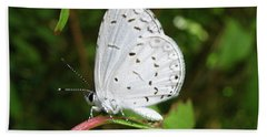Spring Azure Butterfly Beach Sheet by Donna Brown