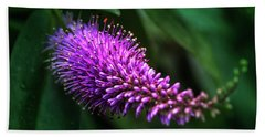 spring beautiful flowers callistemon in subtropics of Russia Beach Sheet