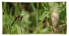 Beach Towel featuring the photograph Spring Dragonfly by LeeAnn McLaneGoetz McLaneGoetzStudioLLCcom