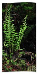 Beach Towel featuring the photograph Spring Ferns by Skip Willits
