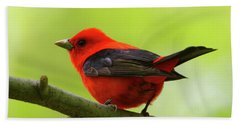 Spring Flame - Scarlet Tanager Beach Sheet
