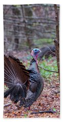 Beach Towel featuring the photograph Spring Gobbler by Bill Wakeley