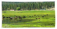 Spring Grazing Beach Sheet