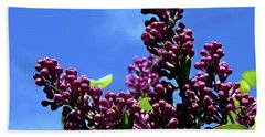 Beach Towel featuring the photograph Spring Lilac by Nick Kloepping