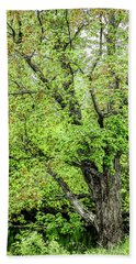 Spring Time By The River Beach Towel