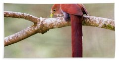 Squirrel Cuckoo Beach Towel