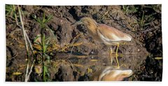 Beach Towel featuring the photograph Squacco Heron - Ardeola Ralloides by Jivko Nakev
