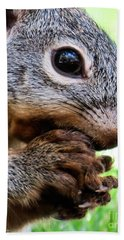 Squirrel 3 Beach Towel