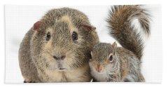 Squirrel And Guinea Beach Sheet