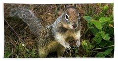 Squirrel At Moonstone Beach, California 001 Beach Towel