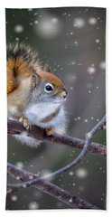 Squirrel Balancing Act Beach Towel
