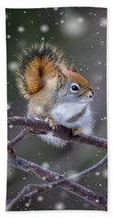 Beach Towel featuring the photograph Squirrel Balancing Act by Patti Deters