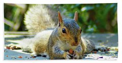 Squirrel Closeup Beach Towel
