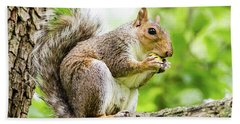 Squirrel Eating On A Branch Beach Towel
