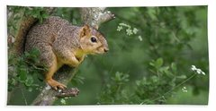 Squirrel In A Tree Beach Towel