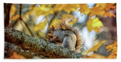 Beach Towel featuring the photograph Squirrel In Autumn by Kerri Farley of New River Nature