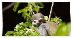 Squirrel Monkey Youngster Beach Sheet by Afrodita Ellerman
